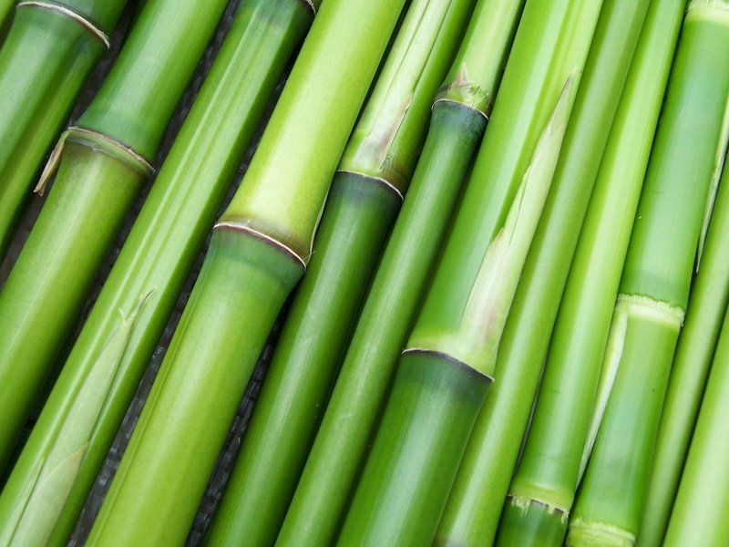 Reel Paper The Bamboo Plant