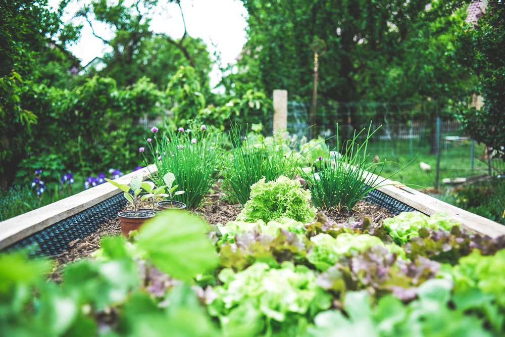 The Best Homegrown Herbs to Grow in Your Garden
