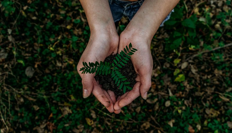 Reel Paper What Is Sustainability & How Can You Go Green in 2020?