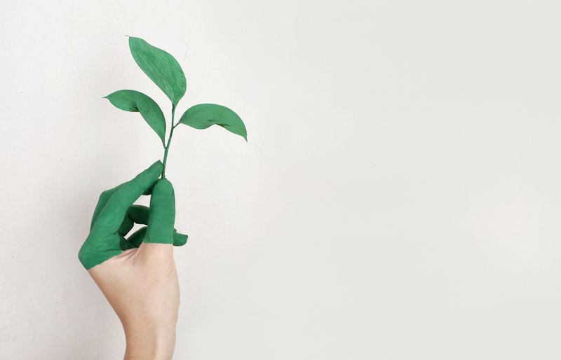 Reel Paper Want to Go Green? These Organizations Can Help!