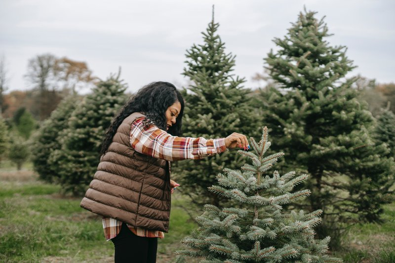 A live Christmas tree is as green as decor can get