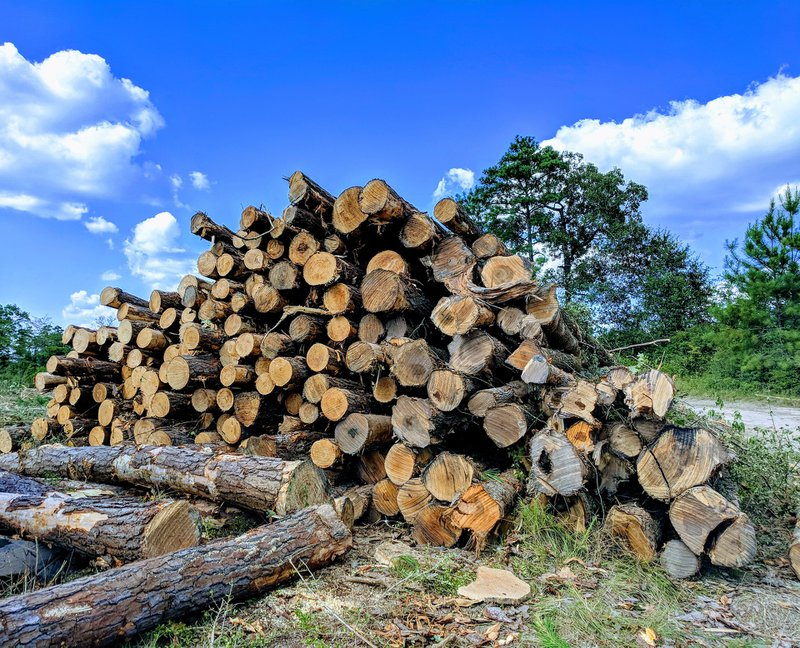 A pile of trees that have been cut down