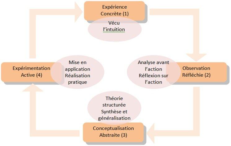quatres styles d'apprentissage Kolb