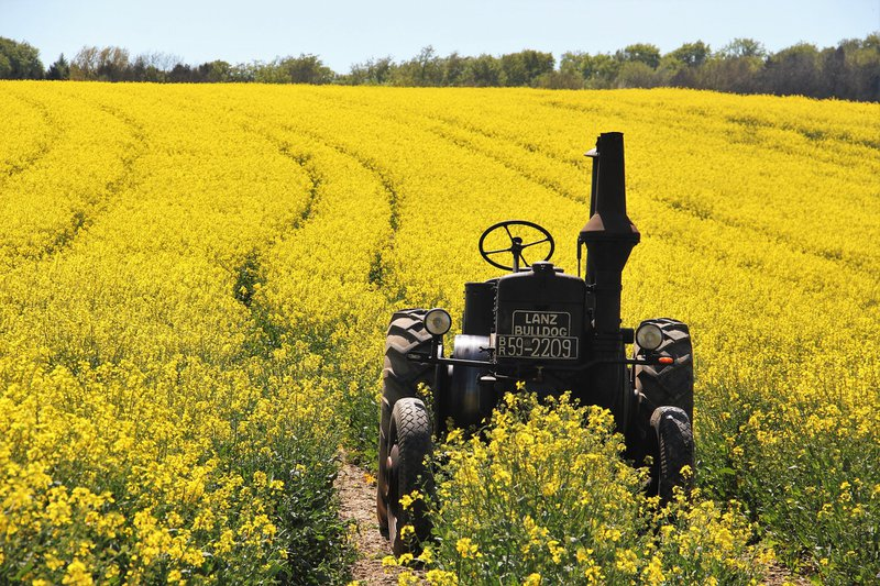 is canola oil good for you