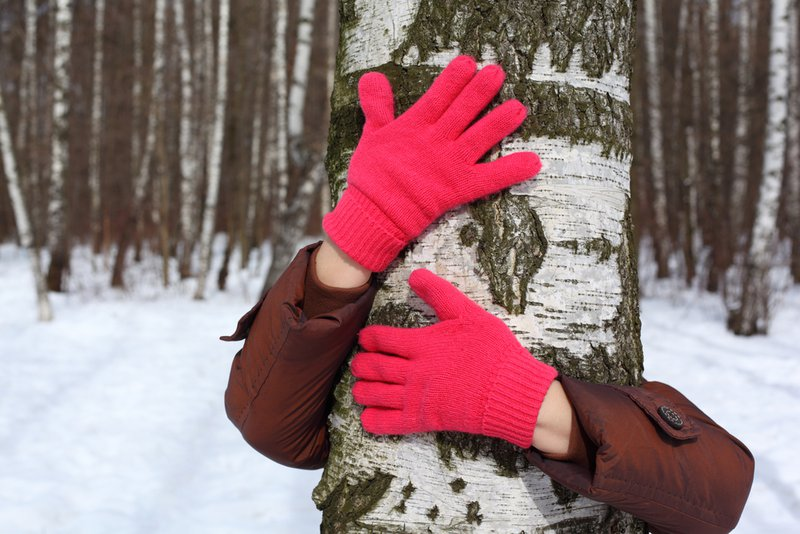 Hands in red gloves embrace russian birch