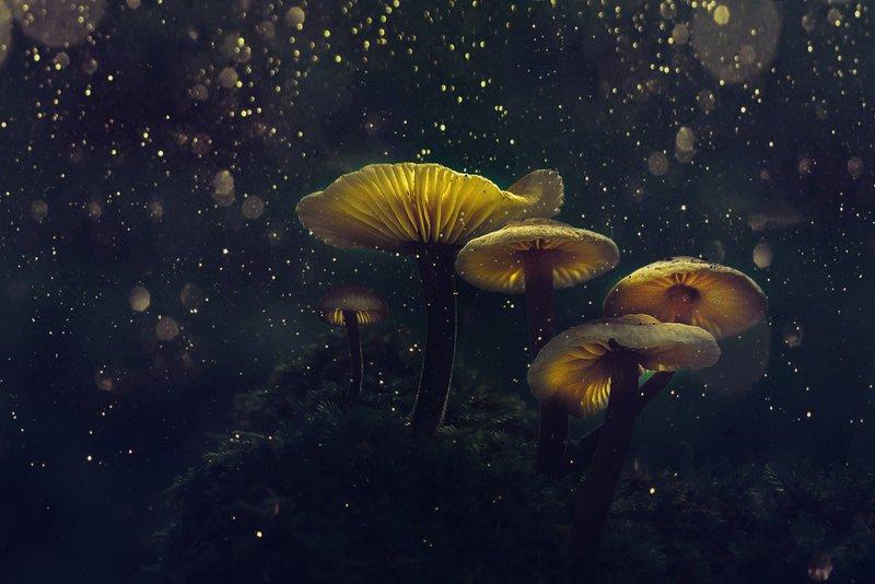 Mushroom Is Medicine