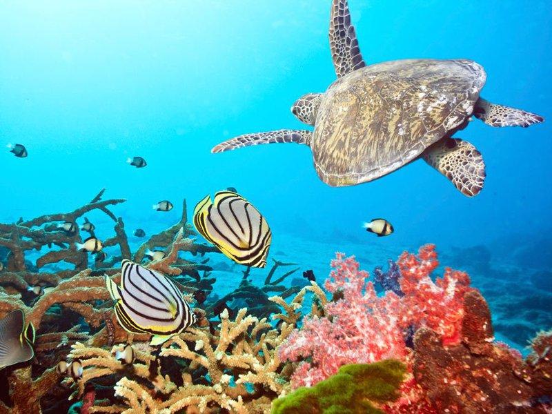 exotische bestemmingen najaar de Malediven