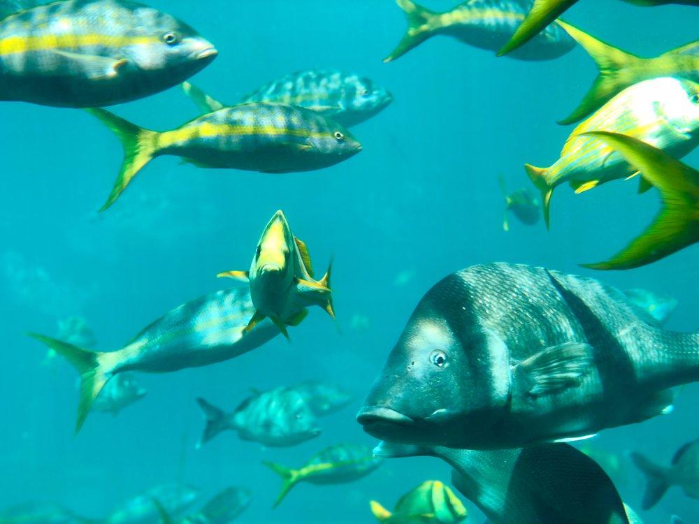 duiken voor beginners