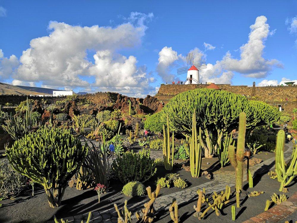 César Manrique: Jardín de cactus