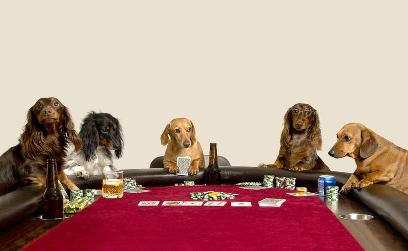 Five Mini Dachshunds playing a game of poker and having  a few drinks