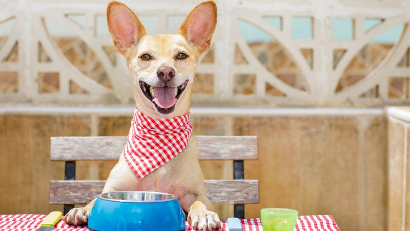 a dog may enjoy some health benefits from a grain-free diet