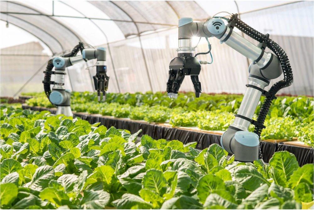 free food AI farm