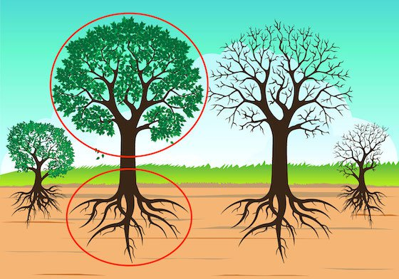 Graphic of trees in bloom with deep roots in the ground