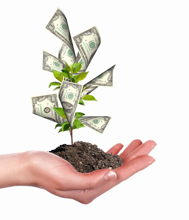 Dollar bills shown growing on a tree to indicate how investing grows money over time