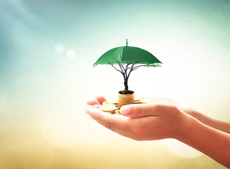 Return on investment (ROI) concept: Human hands holding stacks of golden coins and green umbrella tree on blurred nature background, Image depicts how the PPF is a secure investment option
