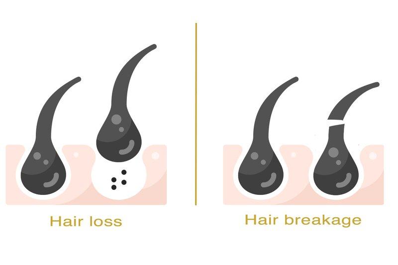 hair breakage vs hair loss