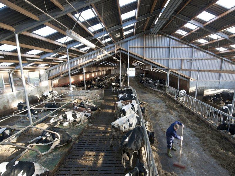 Propere stallen voor gezonde dieren