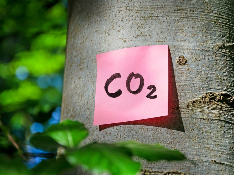 CO2-opslag in hout
