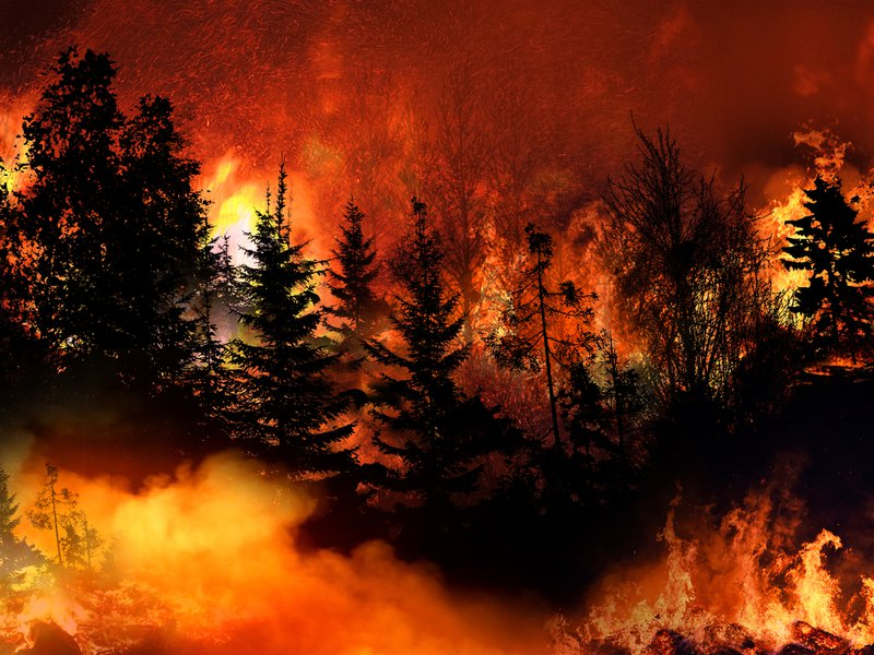 Bosbranden California