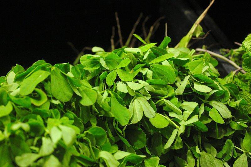benefits of fenugreek seeds soaked in water