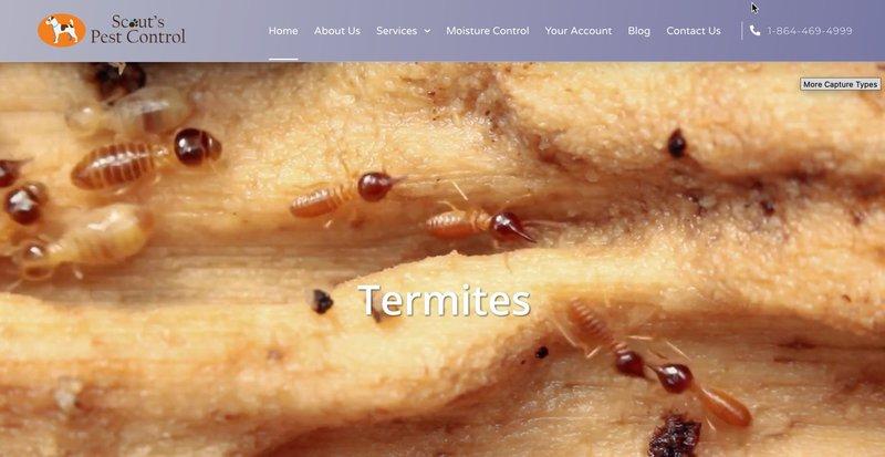 pest control marketing