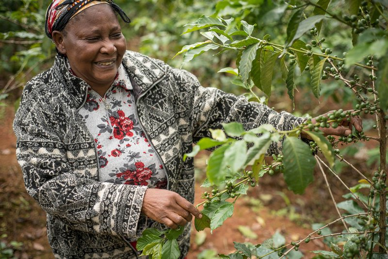 woman picking up coffee beans