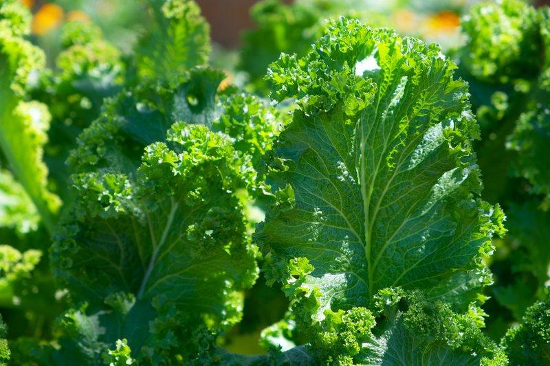 Cruciferous vegetables - Dominique Ludwig