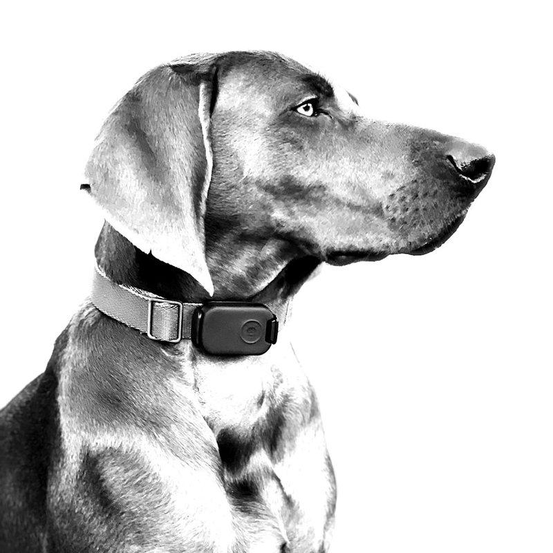 Tech devices - Found LTE dog tracker