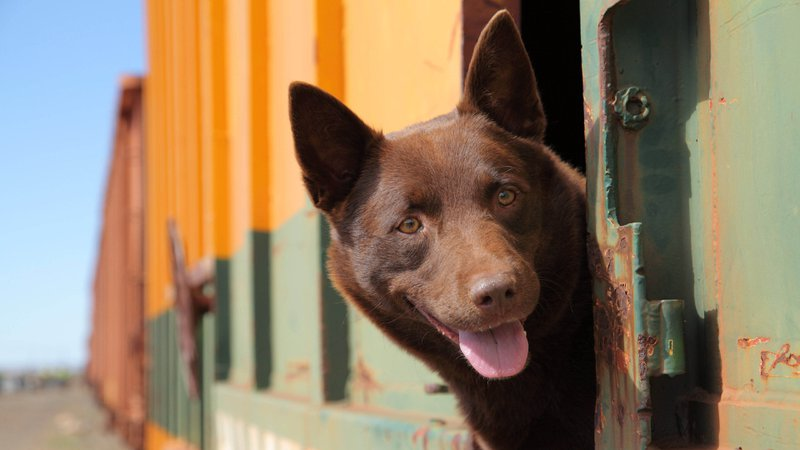 dog-travel-indian-railways-Here's-Everything-You-Need-To-Know