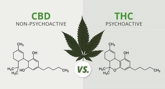 CBD is a chemical compound derived from the Cannabis sativa plant