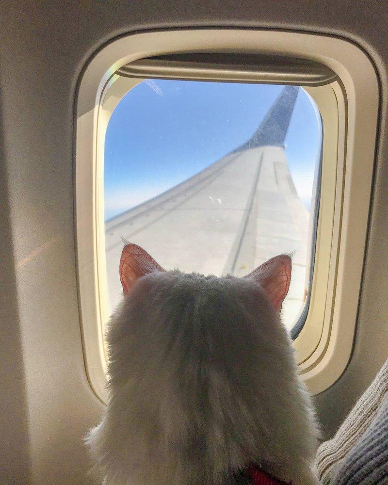 cat-travelling-in-flight