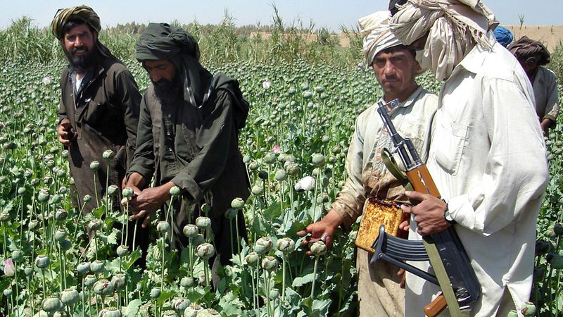 taliban grows opium for cash