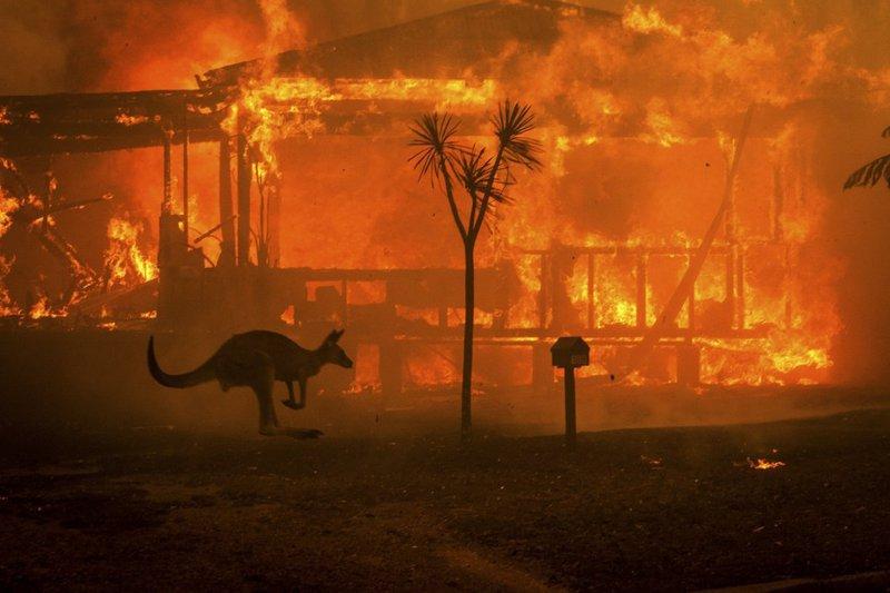 호주 최악의 산불에 대한 DJ 들의 응원과 지지의 메시지