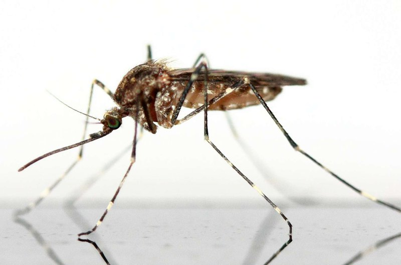 How Do You Get Rid of Mosquitoes in the House?