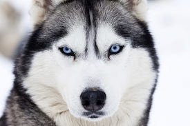 Embark DNA Doggie