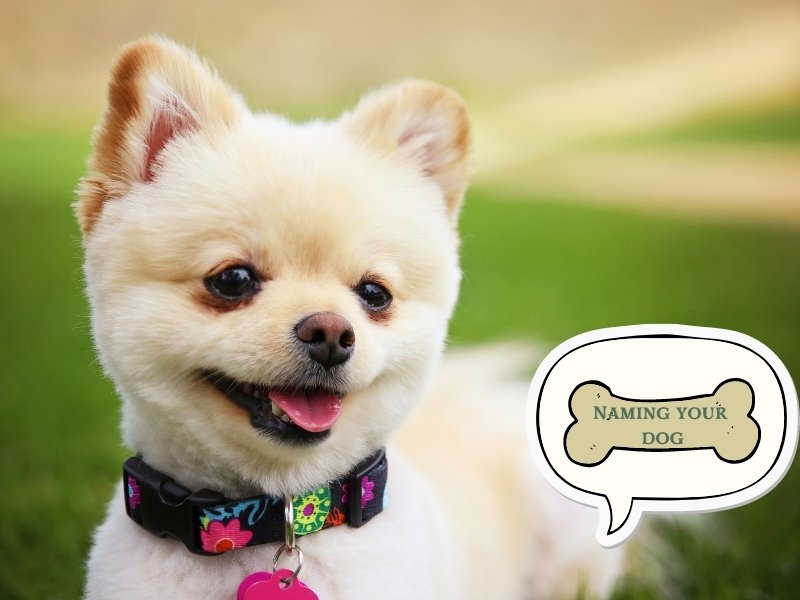 Dog Training Tip 1: Pick a Sensible Name for Your Dog