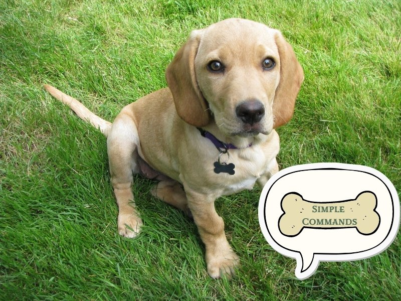Dog Training Tip 3: Use Simple Commands