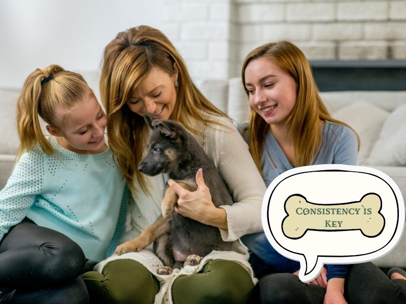 Dog Training Tip 4: Consistency Is Crucial