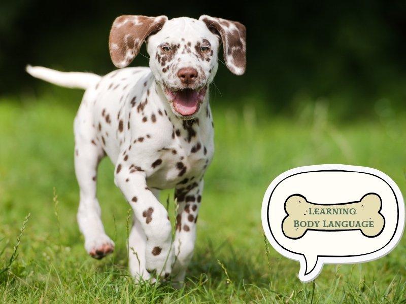 Dog Training Tip 5: Read Their Body Language