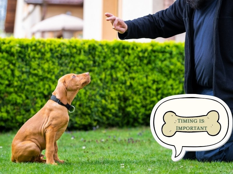 Dog Training Tip 6: Timing Is Everything