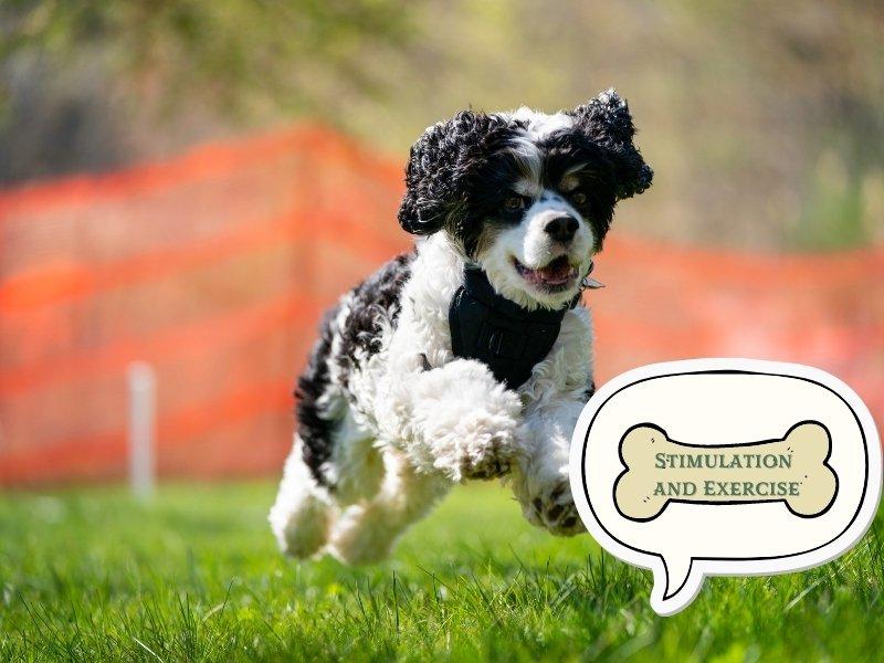 Dog Training Tip 8: Mental Stimulation and Exercise Are Key
