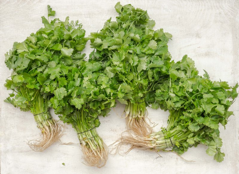 Raw, fresh coriander leaves