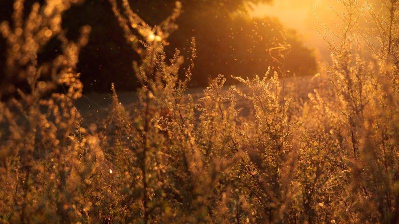 Swaying shrubs at dusk
