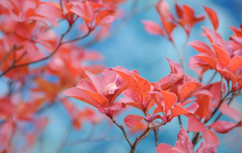pink leafed plant