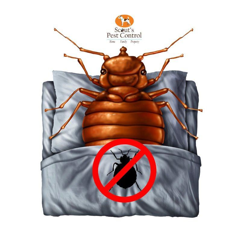 destroy bed bugs