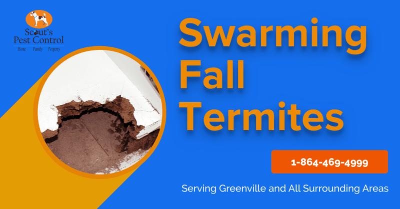 swarming fall termites