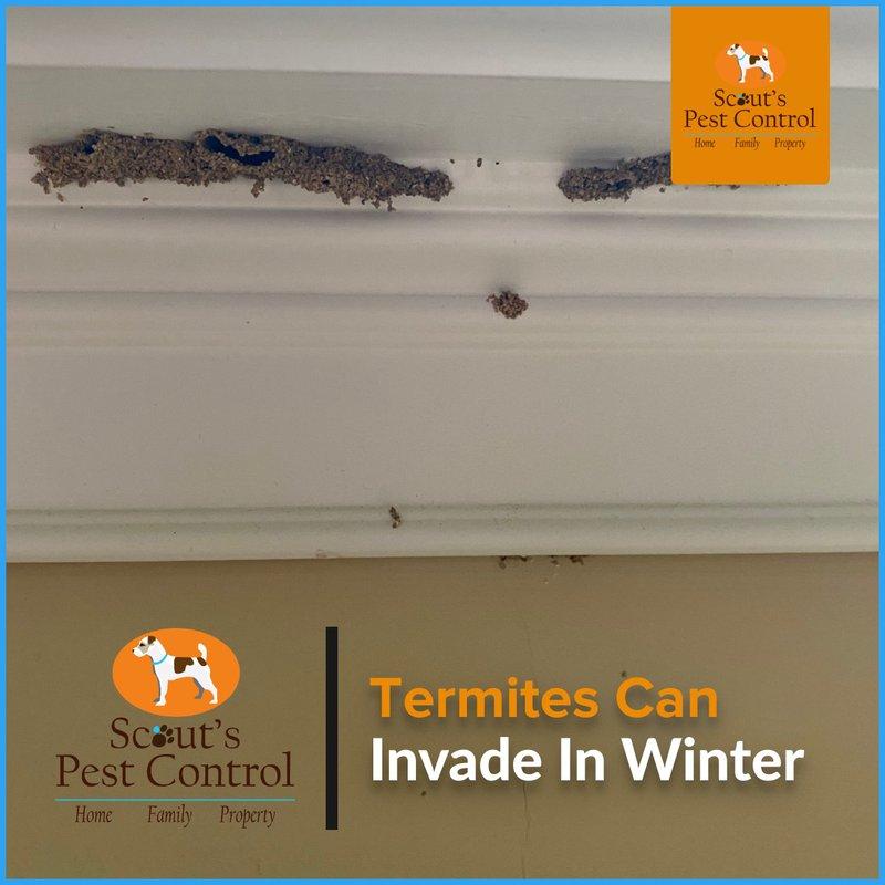 termites in winter