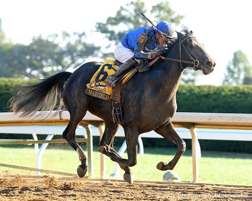 Maxfield enters Saturday's Stephen Foster at Churchill Downs with 6 wins in 7 career starts.
