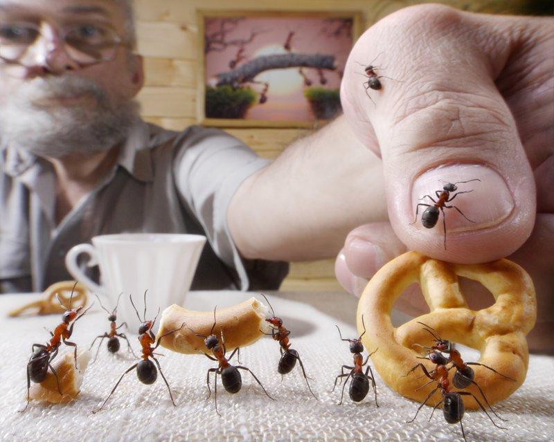 business pest control