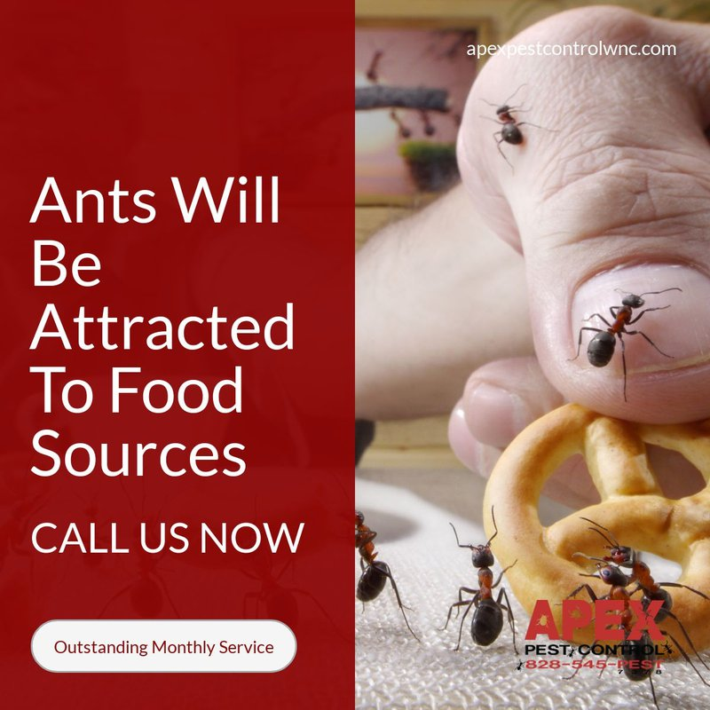 what attracts ants